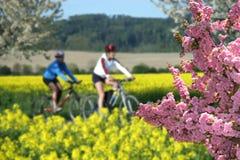 Recreation on bikes Stock Image
