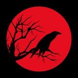 Red moon raven Stock Photos