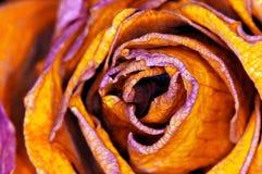 Red-orange Rose - rote Rose Stock Image