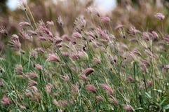 Reed under sunshine Stock Images