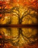 Refelction dell'albero di Autumn Fall Fotografie Stock