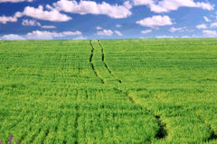 Road through a green field of clouds, serenity Royalty Free Stock Photos