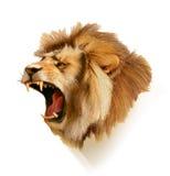 Roaring lion head Stock Photo