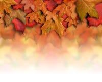 Rode Oranje van de Bladeren van de Daling Grens Als achtergrond Royalty-vrije Stock Fotografie