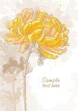 Romantic  background with chrysanthemum Stock Image