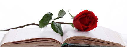 Rose and Book Royalty Free Stock Photos