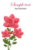 Roses greeting card Royalty Free Stock Photo