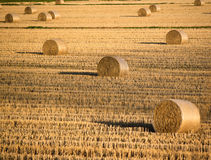 Row crops Stock Photography