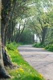 Rural spring road  Stock Photo