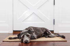 Sad Dog Waiting For Owner Royalty Free Stock Photos