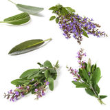 Sage Collection Isolated Stock Photos