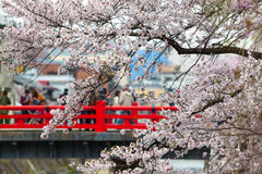 Sakura Season Trip Stock Photos