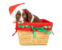 Santa Puppy in Christmas Basket Royalty Free Stock Images