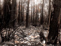 Scena del fuoco del Bush Fotografia Stock