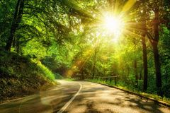 Scenic road in a forest Royalty Free Stock Image