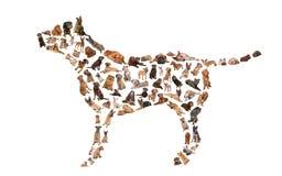 Schattenbild eines Hundes Lizenzfreie Stockfotos