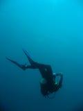 Scuba diver descending sipadan island Stock Photography