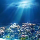 Sea or ocean underwater coral reef snorkeling or diving Royalty Free Stock Photography