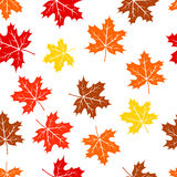 Seamless autumn maple leaves pattern Stock Images