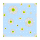 Seamless pattern. Chamomile. Royalty Free Stock Photo