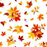 Seamless pattern with colorful autumn leaves on white. Vector illustration. Stock Image