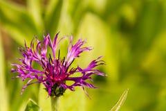 Seasonal flowering plants Royalty Free Stock Photos