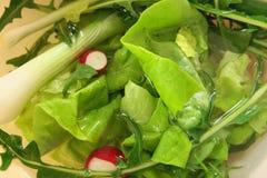 Seasonal salad Royalty Free Stock Image