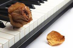 Sec s'est levé avec des mensonges de baisses de l'eau sur le piano Photos stock