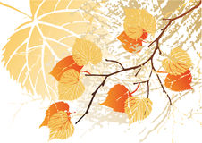 September leaves background Stock Photography