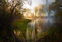 Serene misty morning on a lakeside Stock Photos