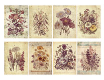 Set of eight shabby vintage floral cards with textured layers and text. Stock Photos
