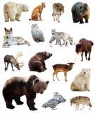 Set of european animals. Isolated over white Royalty Free Stock Photo