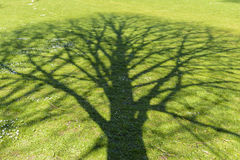 Shade tree Stock Image