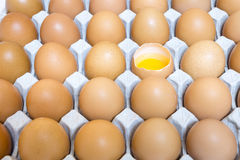 Shell casing egg in package Royalty Free Stock Photography