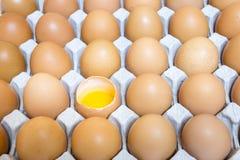 Shell casing egg in package, yolk Stock Image
