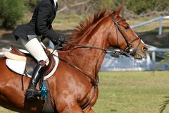 Show Horse and Rider Royalty Free Stock Photography