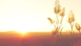 Silhouette  Blurs yellow sky wallpaper and background Royalty Free Stock Photo