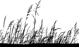 Silhouette grass. Royalty Free Stock Images