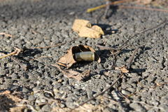 Single Bullet Casing Royalty Free Stock Photography