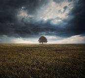Single tree and storm clouds Royalty Free Stock Photos