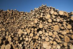 Sky blue pile of wood Royalty Free Stock Images