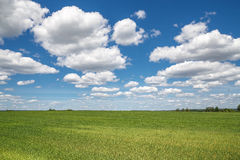 Sky clouds field Royalty Free Stock Photography