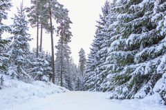 Small country road in winter - Sweden Stock Images