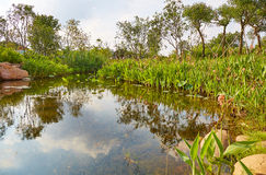 Small garden pond Stock Photo