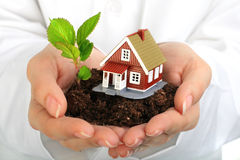 Small house and plant in hands. Royalty Free Stock Image
