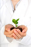 Small plant in hands. Royalty Free Stock Image