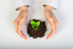 Small plant in hands. Stock Photo