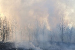 Smog in forest fire Stock Image
