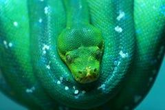 Snake Stock Image