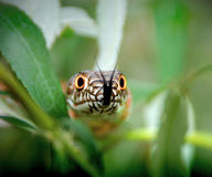 Snake in the bushes Stock Photography